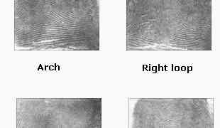 What are the most common fingerprint characteristics?